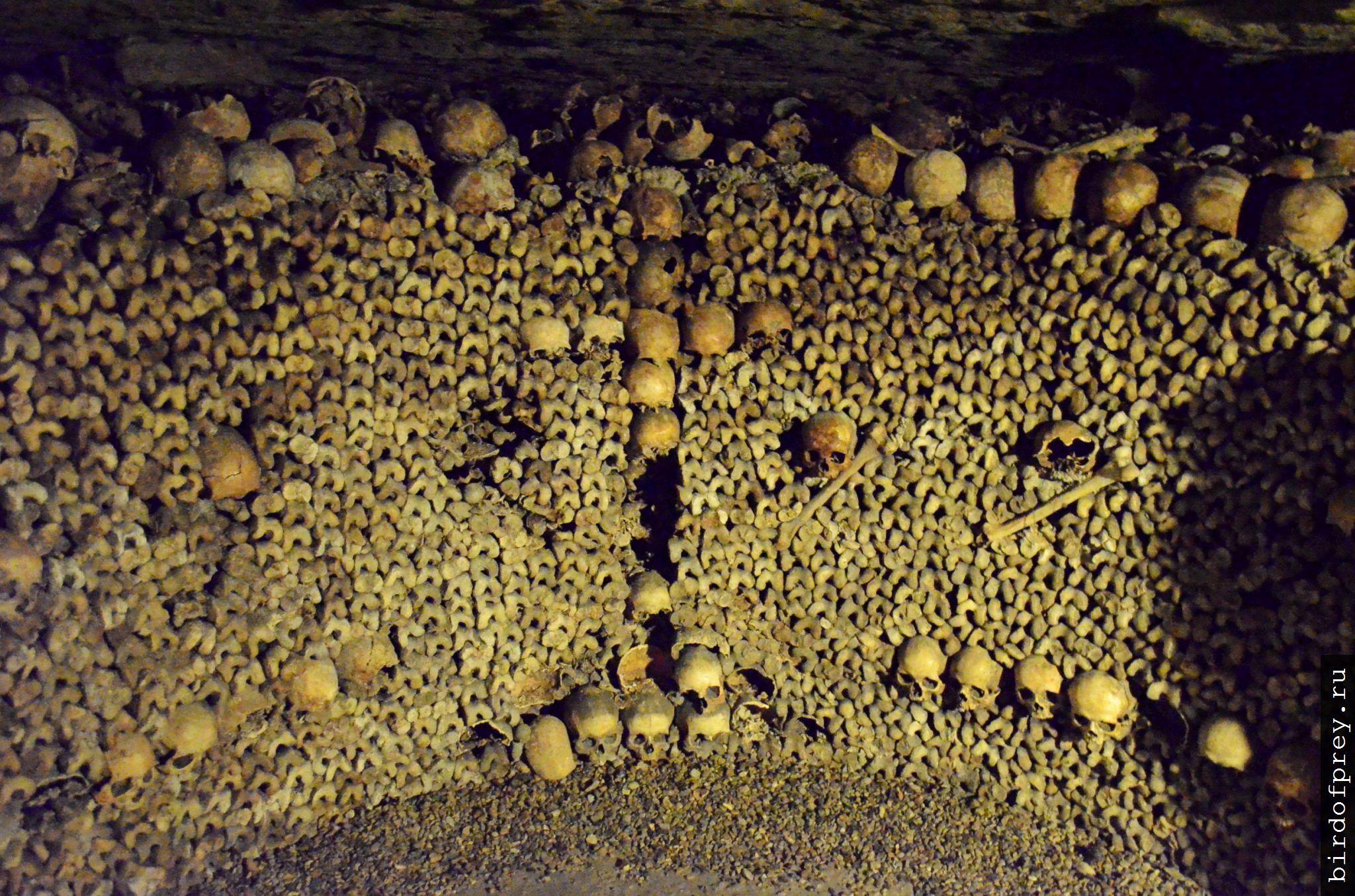 На территории бывшего  артсклада на Полтавщине обнаружили груду костей - Цензор.НЕТ 83